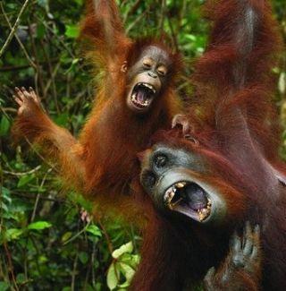 Il solletico come strumento sociale si ritrova solo nell'uomo e negli altri primati.
